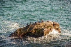 Βράχοι κορμοράνων Στοκ εικόνες με δικαίωμα ελεύθερης χρήσης