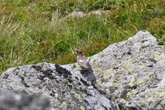 Βράχοι λίγων πουλιών και βουνών Στοκ Εικόνες
