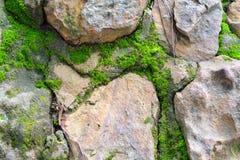 Βράχοι με τη λειχήνα στοκ φωτογραφία