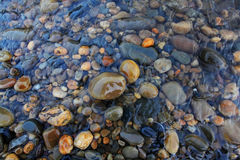 Βράχοι ποταμών