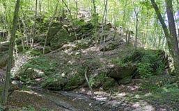 Βράχοι σε ένα δάσος Στοκ Εικόνες