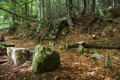 Βράχοι στα ξύλα στοκ φωτογραφία