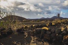 Βράχοι στη ζωηρόχρωμα έρημο και τα δέντρα Στοκ Εικόνες