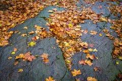 Βράχοι σφενδάμνου Στοκ εικόνες με δικαίωμα ελεύθερης χρήσης