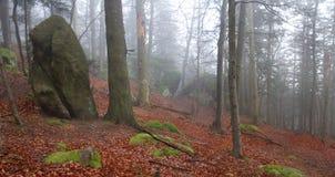 Βράχοι ψαμμίτη στο misty δάσος Στοκ φωτογραφίες με δικαίωμα ελεύθερης χρήσης