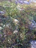 Βράχοι Στοκ Εικόνα