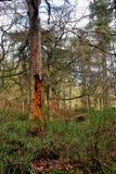 Βράχοι Hardcastle, δύση Yorskhire στοκ φωτογραφίες