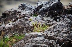 Βράχος λάβας Στοκ εικόνα με δικαίωμα ελεύθερης χρήσης