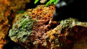 Βράχος βρύου Στοκ Εικόνα