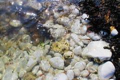 βράχος λιμνών Στοκ Φωτογραφία
