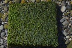 Βράχος κάτω από το χορτάρι στη θάλασσα στοκ φωτογραφία με δικαίωμα ελεύθερης χρήσης