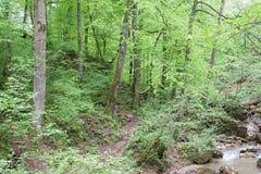 Βράχος και δέντρο που καλύπτονται με το βρύο στοκ εικόνες με δικαίωμα ελεύθερης χρήσης