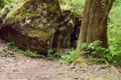Βράχος και δέντρο που καλύπτονται με το βρύο στοκ εικόνες