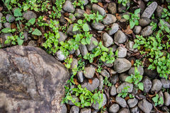 Βράχος και αμμοχάλικο στοκ φωτογραφίες