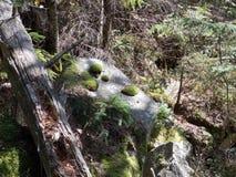 Βράχος και βρύο Στοκ εικόνες με δικαίωμα ελεύθερης χρήσης