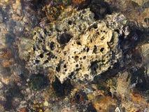 Βράχος και θάλασσα Στοκ φωτογραφίες με δικαίωμα ελεύθερης χρήσης