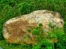 Βράχος και λουλούδια Στοκ εικόνες με δικαίωμα ελεύθερης χρήσης