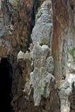 Βράχος κροκόδειλος-μορφής, σπηλιές Batu, Μαλαισία Στοκ Εικόνες