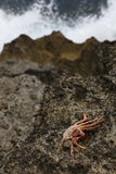 βράχος λάβας καβουριών Στοκ Εικόνα