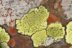 βράχος λειχήνων Στοκ Εικόνες