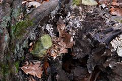 Βράχος μεταξύ των ριζών Στοκ εικόνες με δικαίωμα ελεύθερης χρήσης