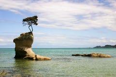 βράχος με μια ανάπτυξη δέντρων στην κορυφή του, πάρκο του Abel Tasman, Στοκ Εικόνες