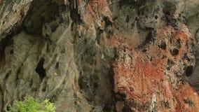 Βράχος με τα δέντρα απόθεμα βίντεο