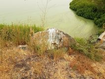 Βράχος με το επίστεγο πουλιών και πράσινα άλγη στο νερό στη λίμνη με τις καφετιές και πράσινες χλόες στοκ φωτογραφία με δικαίωμα ελεύθερης χρήσης