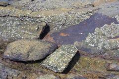 βράχος παραλιών ηφαιστει&a Στοκ Φωτογραφία