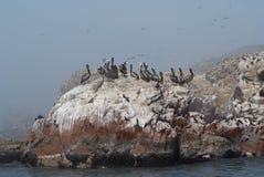 βράχος πελεκάνων κοπαδιών Στοκ φωτογραφία με δικαίωμα ελεύθερης χρήσης