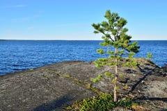 βράχος πεύκων Ακτή της άσπρης θάλασσας, Καρελία, Ρωσία Στοκ φωτογραφία με δικαίωμα ελεύθερης χρήσης