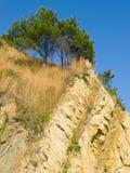 βράχος πεύκων Στοκ Φωτογραφίες