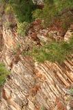 βράχος πεύκων Στοκ φωτογραφίες με δικαίωμα ελεύθερης χρήσης