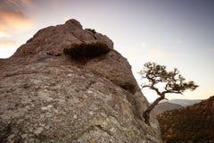 βράχος πεύκων Στοκ Εικόνα