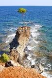 βράχος πεύκων Στοκ Φωτογραφία