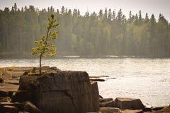 βράχος πεύκων Στοκ εικόνα με δικαίωμα ελεύθερης χρήσης