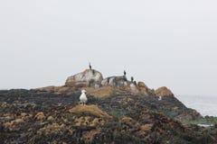 Βράχος πουλιών, παραλία χαλικιών, Drive 17 μιλι'ου, Καλιφόρνια, ΗΠΑ Στοκ Φωτογραφίες