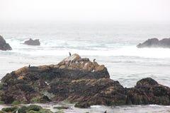 Βράχος πουλιών, παραλία χαλικιών, Drive 17 μιλι'ου, Καλιφόρνια, ΗΠΑ Στοκ Εικόνες