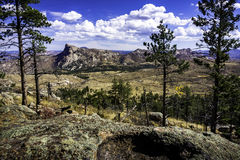 Βράχος προβάτων από τα δέντρα Στοκ Εικόνα