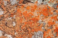 βράχος προτύπων λειχήνων α&nu Στοκ εικόνα με δικαίωμα ελεύθερης χρήσης