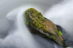 Βράχος σε έναν ταραχώδη ποταμό βουνών, μεγάλη πέτρα στο νερό που καλύπτεται από το καταπληκτικό πράσινο βρύο σε μια όμορφη ημέρα  Στοκ φωτογραφία με δικαίωμα ελεύθερης χρήσης