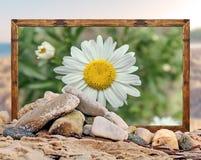 Βράχος στην παραλία με το όμορφο πλαίσιο εικόνων λουλουδιών μαργαριτών και Στοκ Εικόνες