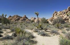 Βράχος στο δέντρο NP του Joshua στοκ εικόνες με δικαίωμα ελεύθερης χρήσης