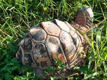 Βράχος χελωνών στο λιβάδι Στοκ εικόνα με δικαίωμα ελεύθερης χρήσης