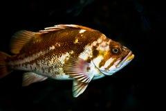 βράχος ψαριών στοκ εικόνα με δικαίωμα ελεύθερης χρήσης