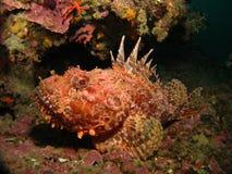 βράχος ψαριών στοκ φωτογραφία με δικαίωμα ελεύθερης χρήσης
