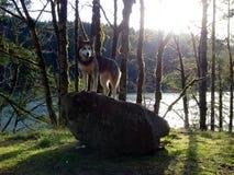Βράχος λύκων Στοκ εικόνα με δικαίωμα ελεύθερης χρήσης