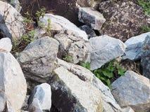 Βράχος Στοκ Εικόνες