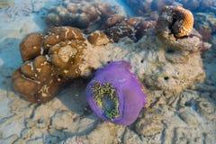βράχος anemone και κοραλλιών κάτω από το νερό Στοκ φωτογραφίες με δικαίωμα ελεύθερης χρήσης
