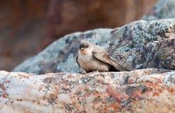 βράχος Martin Στοκ Φωτογραφίες